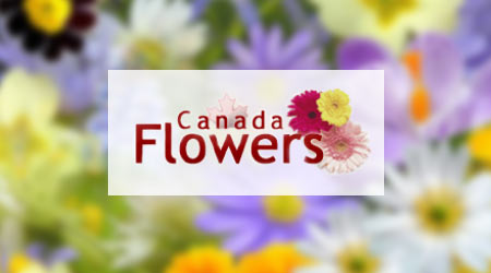 Digital Marketing for Canada Flowers